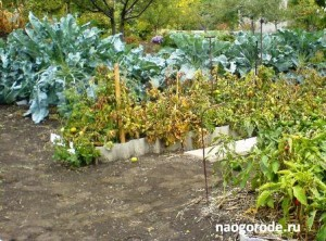 выбор места для посадки растений
