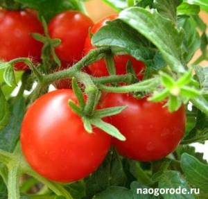 томаты-биф