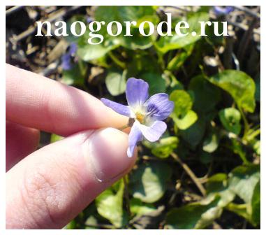 Фотографии на Блоге Опытный дачник