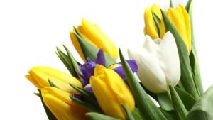 Дачные тюльпаны