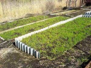 зелёные грядки на огороде