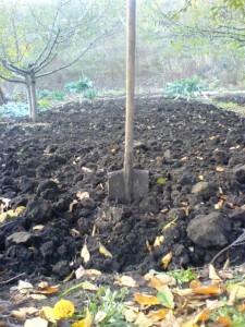 Осенье - время подготовки почвы к весне, мы перекопали огород.