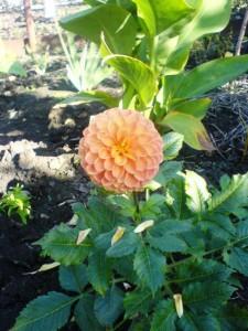 огненный цветок - красота