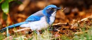 птица уничтожает насекомых на огороде