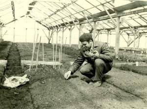 теплица, нормальные условия для роста растений