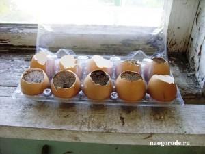 Яичные горшочки в лотке, готовые для наполнения землёй.