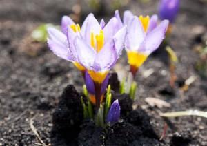 правильный уход за цветами- многолетниками