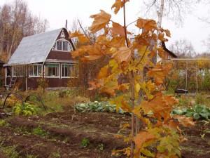 мох и лишайник появляется на огороде