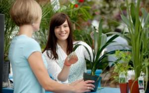 домашние растения для квартиры