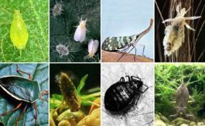 сад и огород болезни и вредители