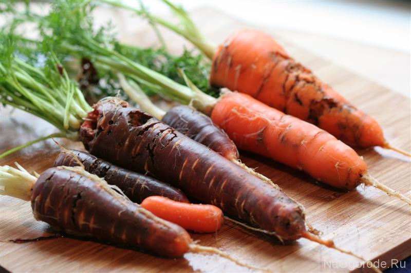 Морковь пораженная морковной мухой, фото