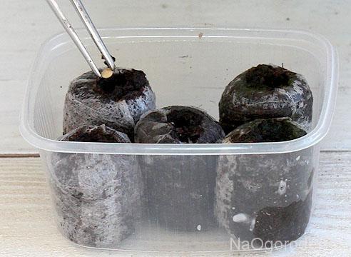 устанавливаем таблетки с семенами перца в емкости