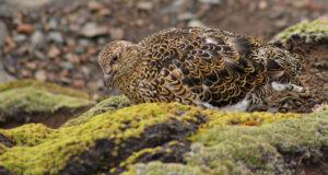 фотография азореллы и птицы
