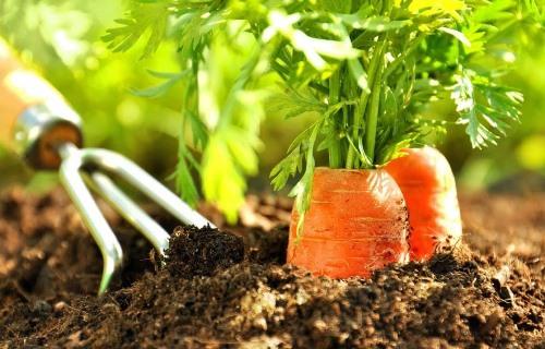такой урожай можно получить при правильном посеве