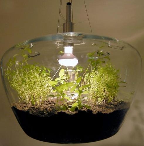 как вырастить рассаду в старом аквариуме