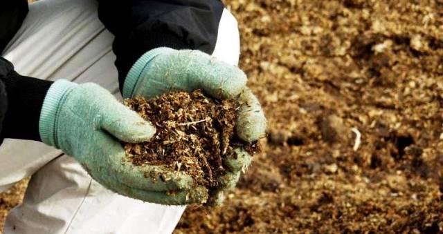 Органические удобрения для лука