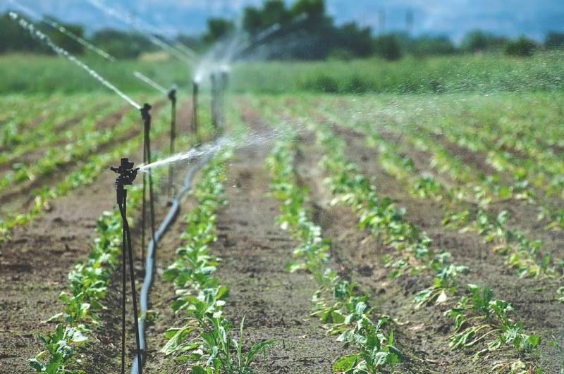 автоматическая система полива на огороде