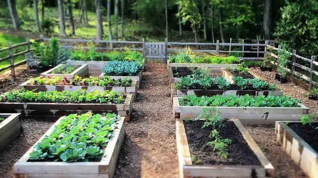 Планирование огородного участка на даче
