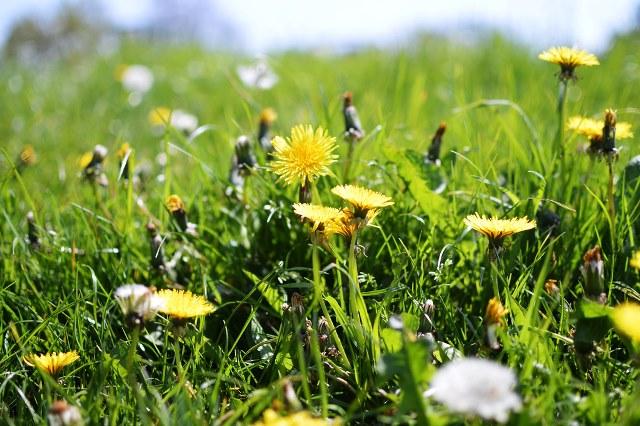 фото сорняков на огороде