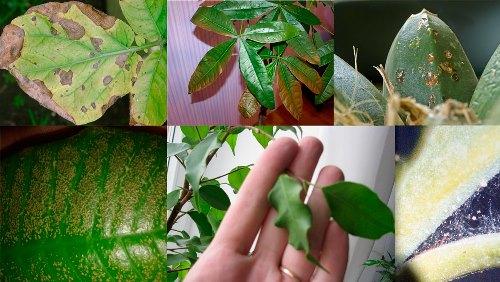 заболевания растений с описанием симптомов и причин