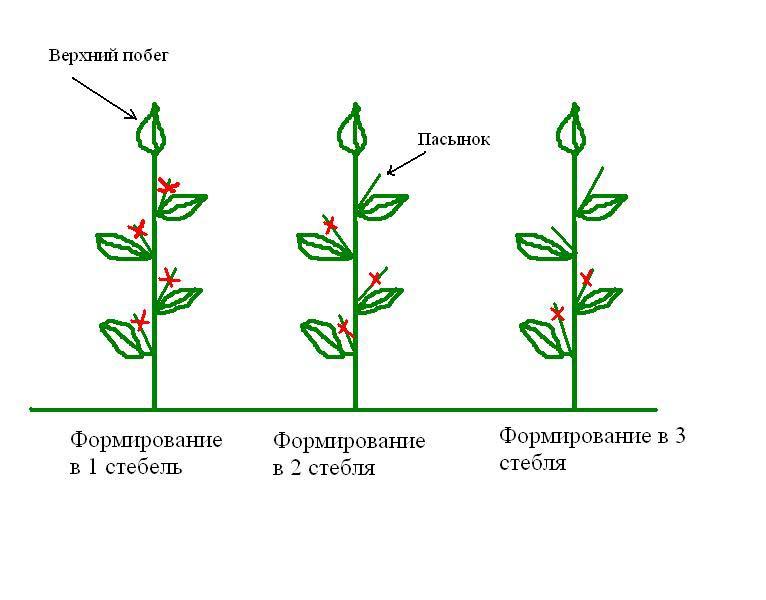 схема пасынкования томатов