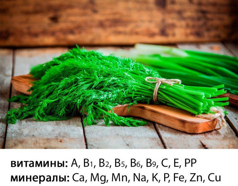 витамины и минералы в укропе