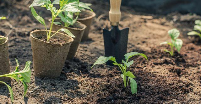 изготавливаем почву рассадную