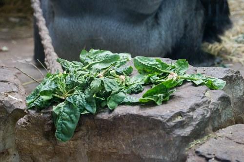 использование полезных свойств шпината